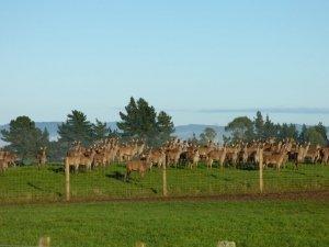 deer velvet sports nutrition